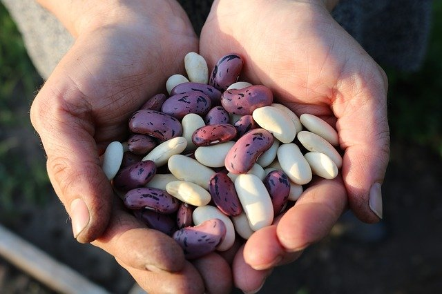ruce s fazolemi